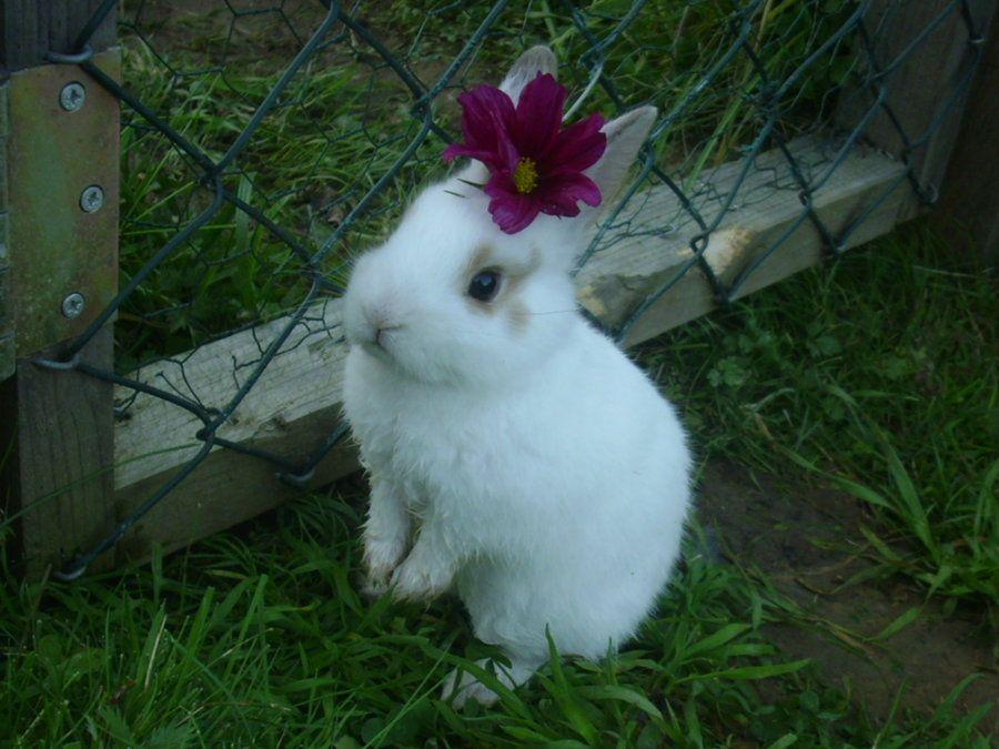 Baby bunny by Hirotaka712.deviantart.com on @deviantART