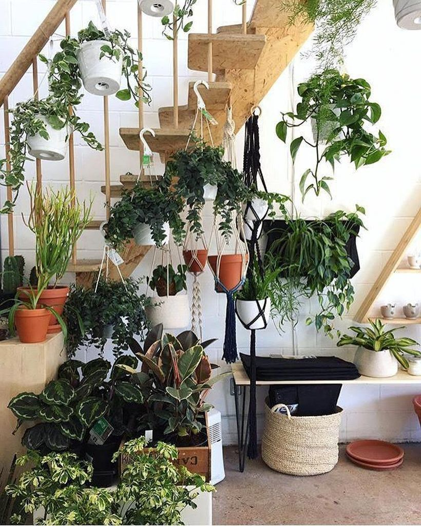 House Plants For Shady Rooms: Stunning56 Brilliant Indoor Gardening Ideas That Will