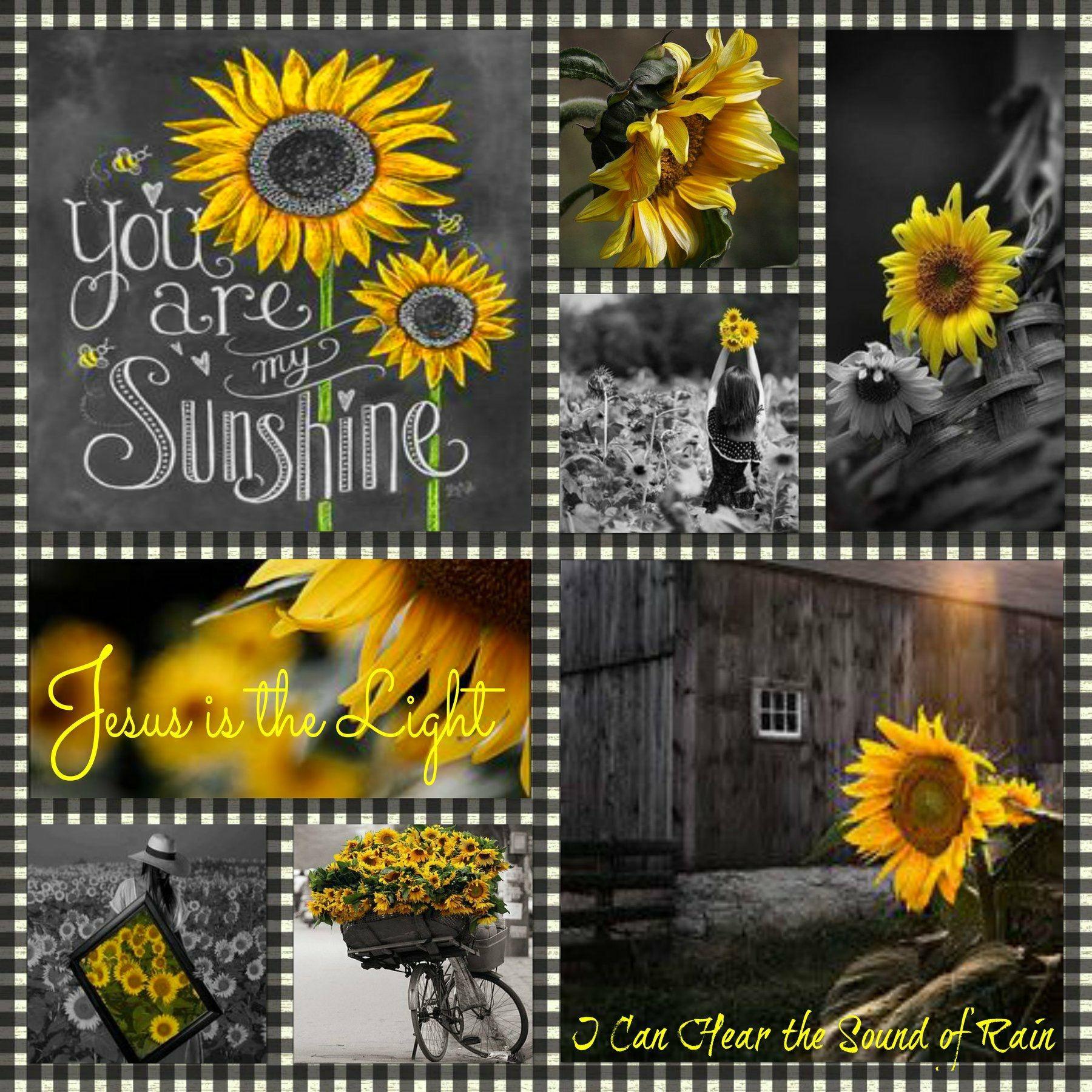 Pin von Mary Lou auf Good mood mornings | Pinterest | Sonnenblumen ...
