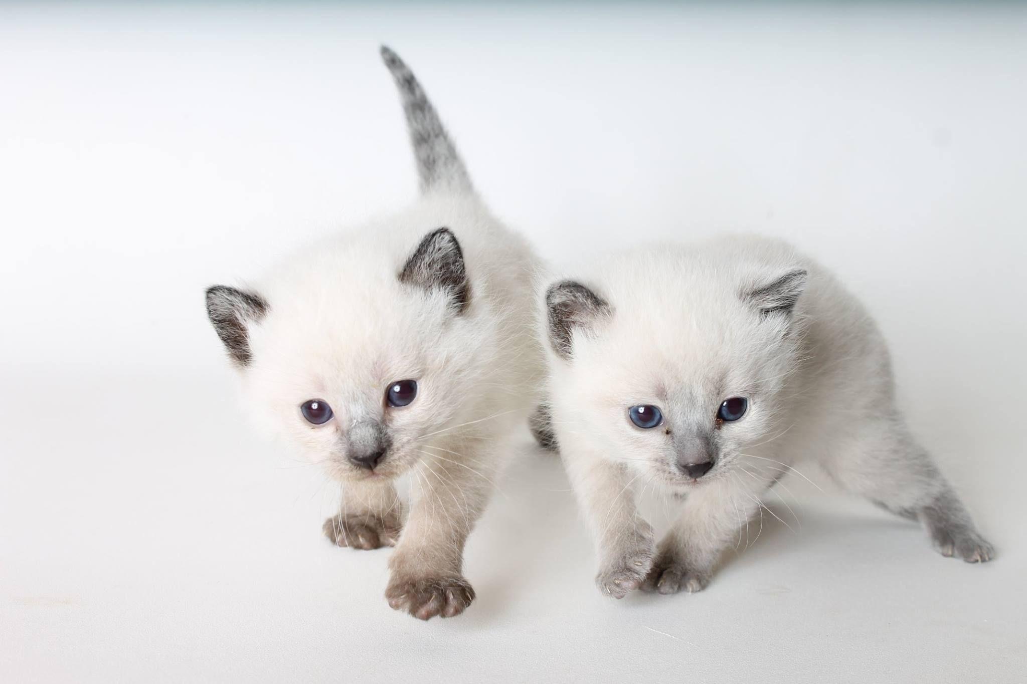 Kitten Love At Living Free Animal Sanctuary Kittens Rescue Adopt Animal Sanctuary Animals Kitten Love