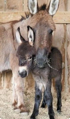 Mummy looking after her baby