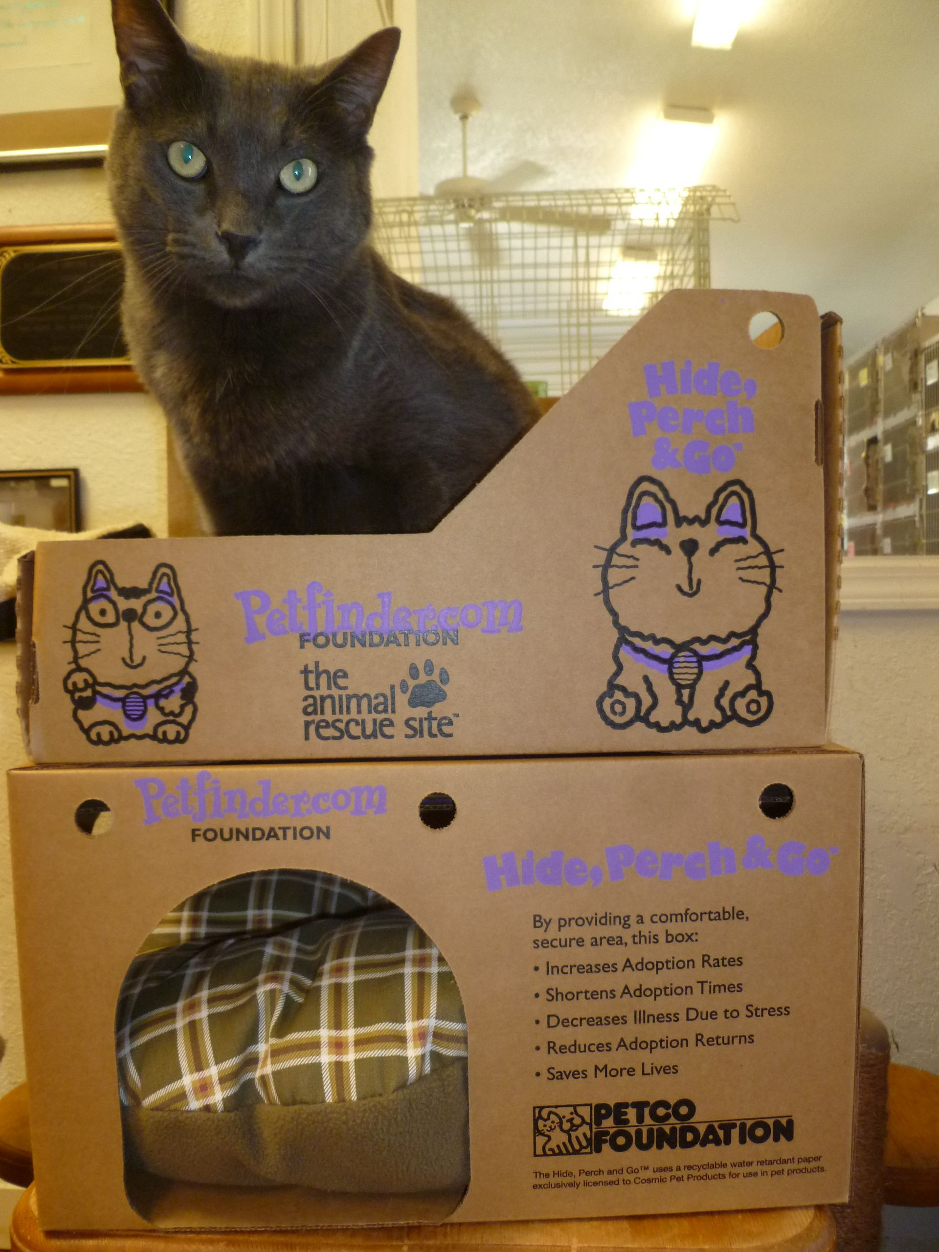 Cheech Demonstrates The New Hide Perch Go Boxes From Petco Petfinder Http Www Petfinder Com Admin Content Hide Perc Animal Rescue Site Animal Rescue Petco
