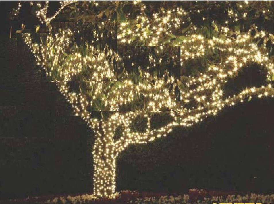 Lighting Outdoor Trees Outdoor Tree Lighting Christmas Lights Outdoor Trees Outdoor Trees