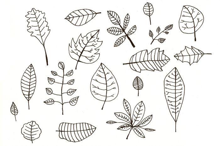 #illustration a collection of leaves