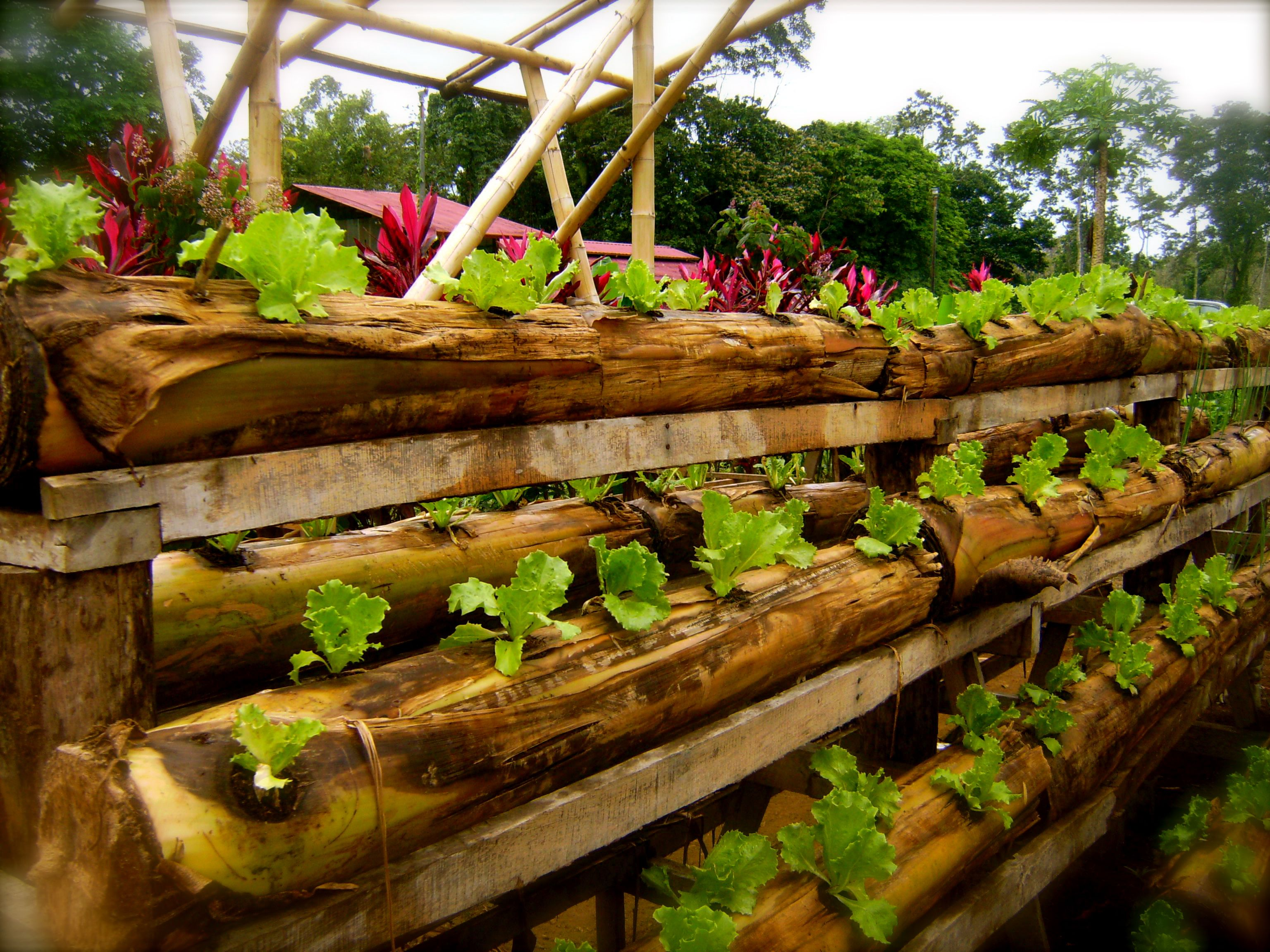 hydroponics bamboo - Google Search | Creative Homes & Projects ...