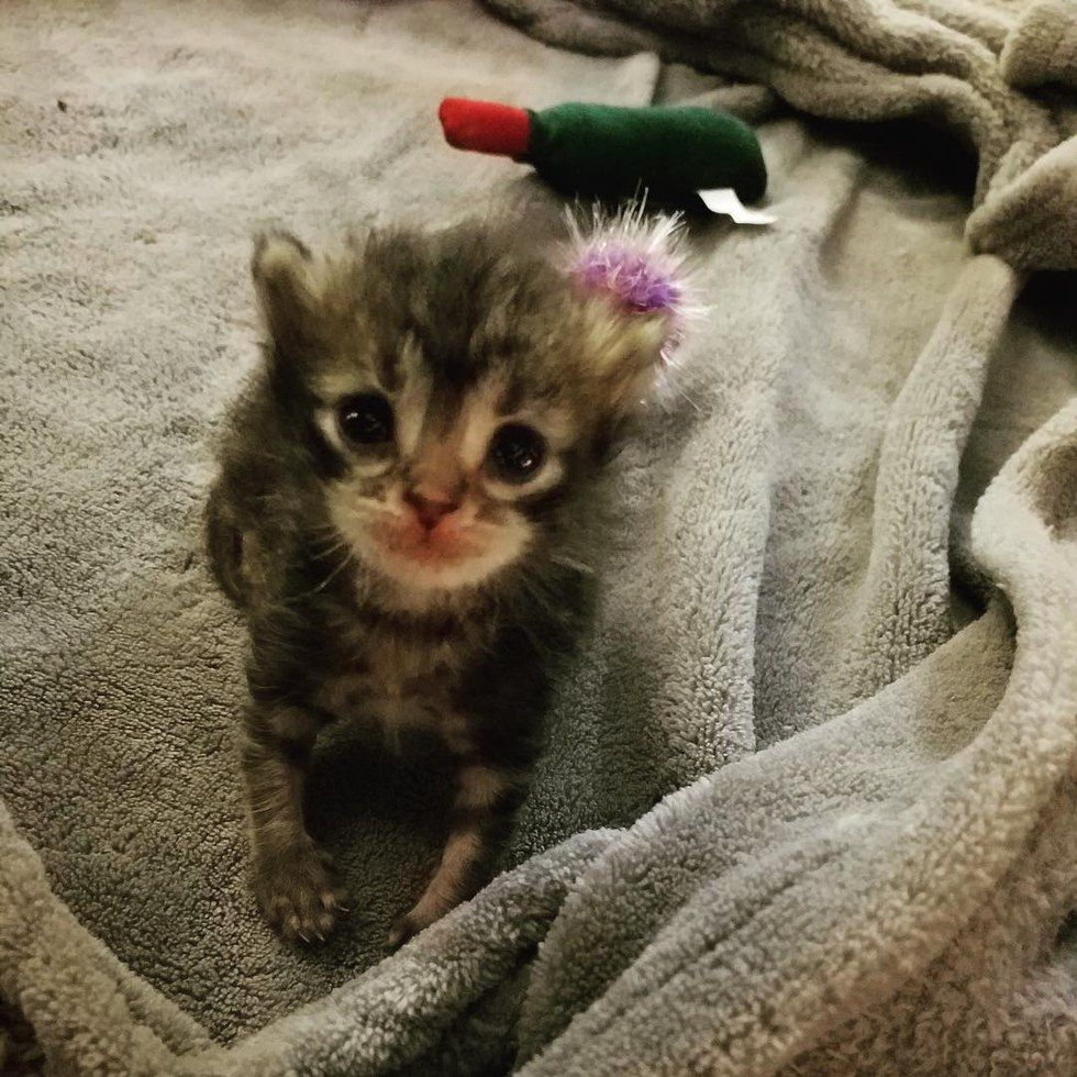 A Kitten Was Found Underneath A Jacuzzi Fighting To Live He Was The Only Survivor Of His Litter And Found Without A Mother Mee Gorgeous Cats Tiny Kitten Cats