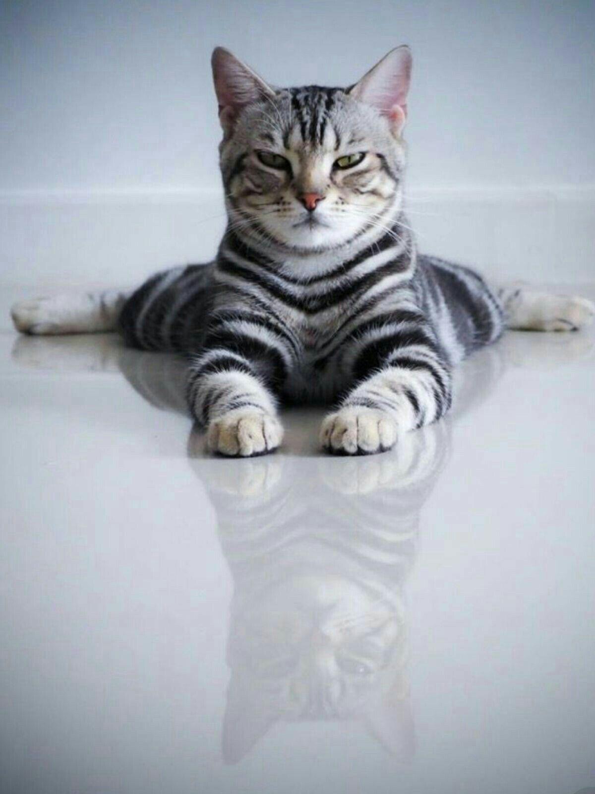 Pin Von Maria Anna Auf Katzen Bilder Mit Bildern Katzen Tiere