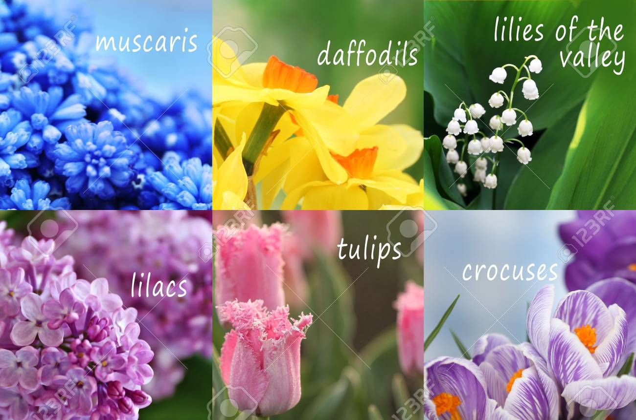 Pin By Sitewall Flower On Flower Wall Spring Flowers Names Beautiful Flower Names Flower Names