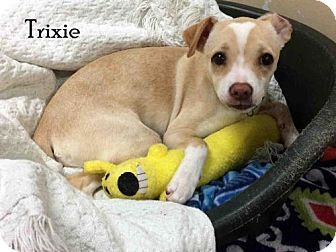 Fort Myers Fl Chihuahua Mix Meet Trixie A Puppy For Adoption
