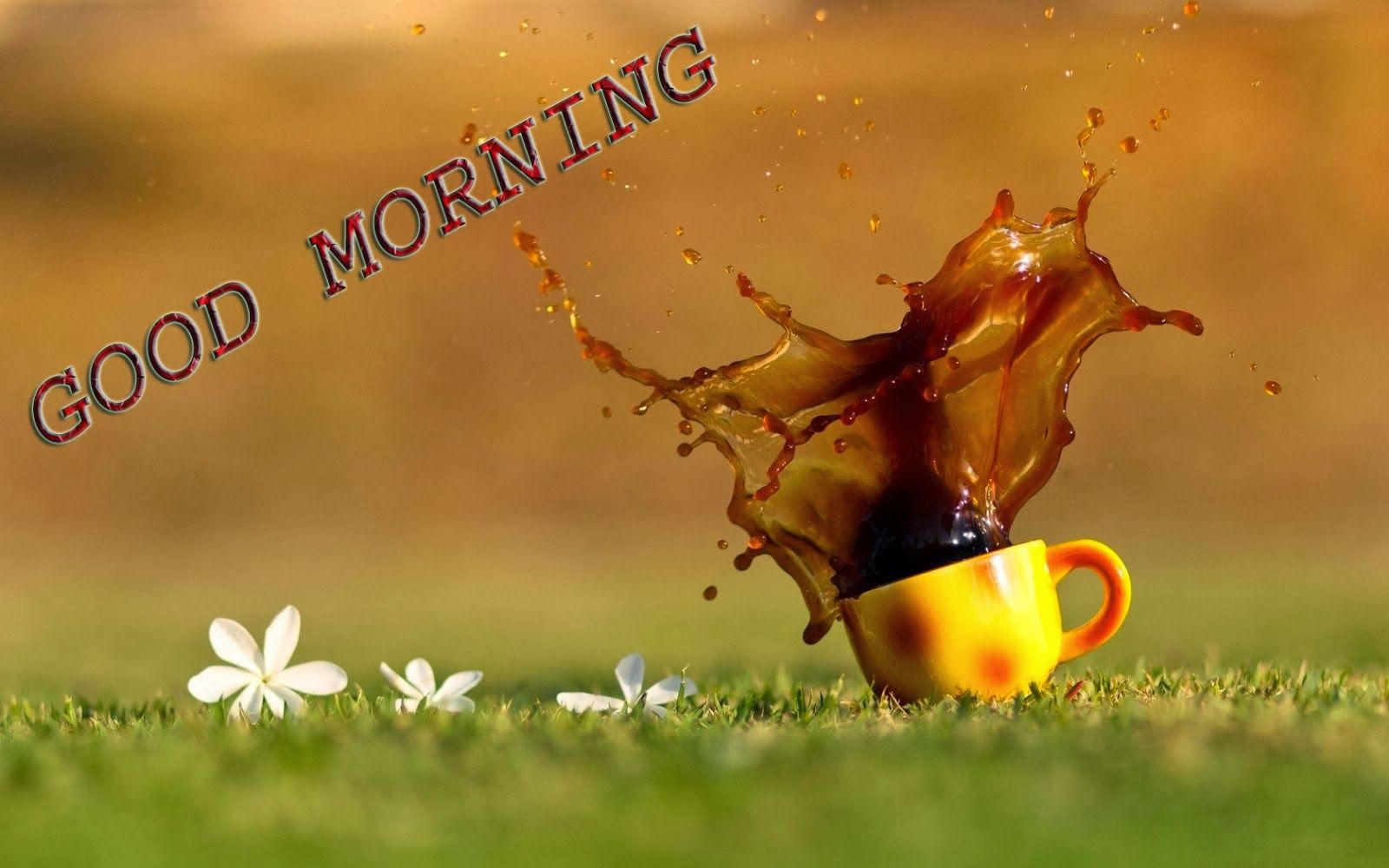 Download Good Morning Love Images, Wallpapers, Pictures, Photos, Wishes, SMS, cards, Quotes ...