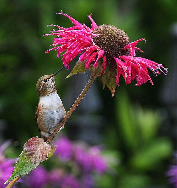 Hummingbird and flower.