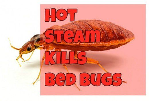Non Chemical Way To Slay Bed Bugs Bed Bugs Hot Steam Bugs