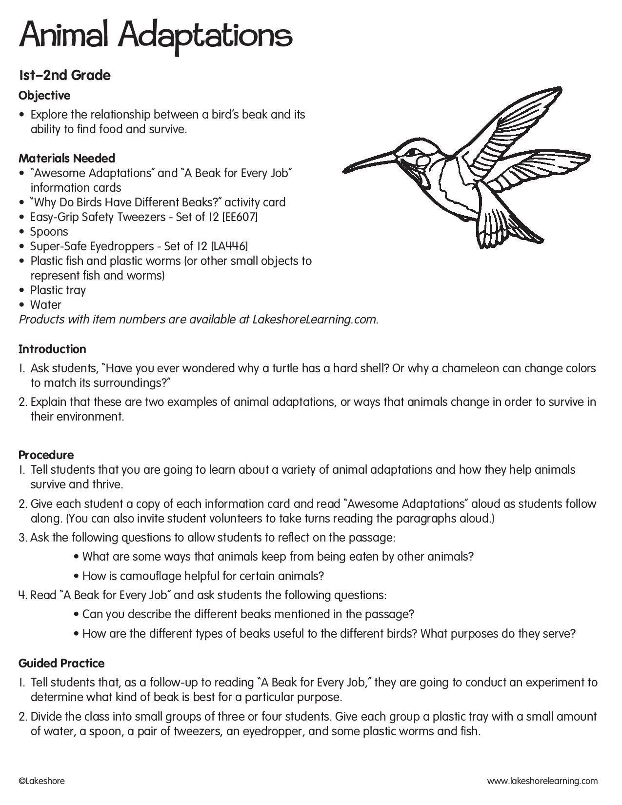 Animal Adaptations Lessonplan