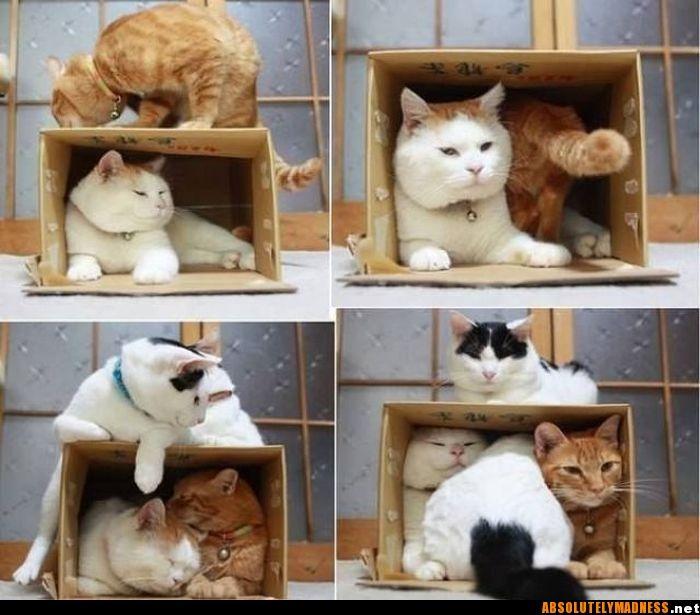 Kitties!!!!!!!!!!!!