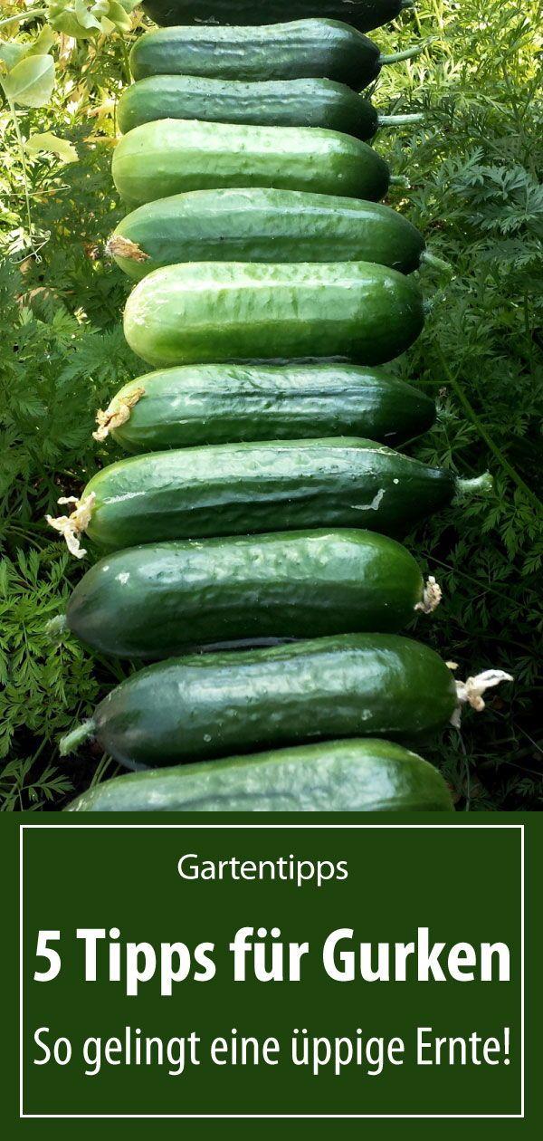 5 Tipps für Gurken aus dem eigenen Garten – grüneliebe
