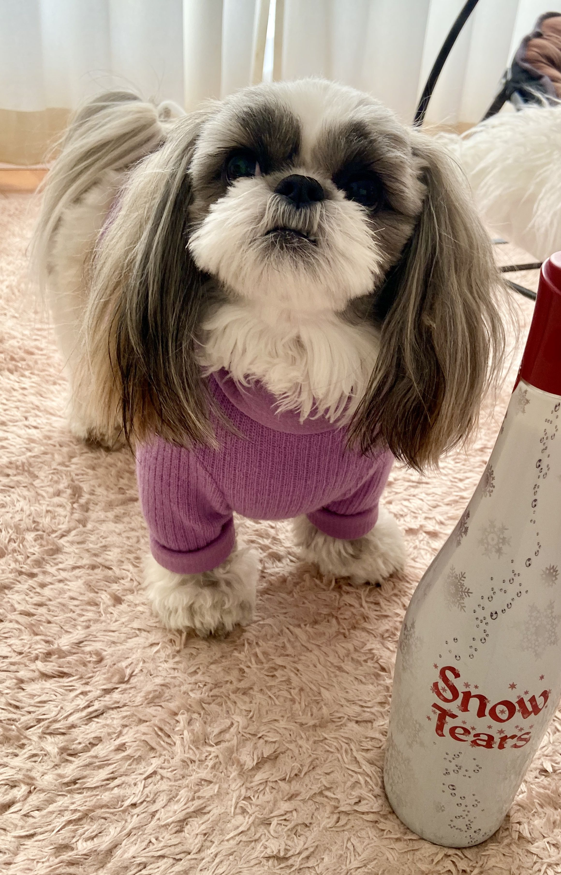 Pin By Rileyo On Cute Animals Cute Creatures Dressed Up Dogs