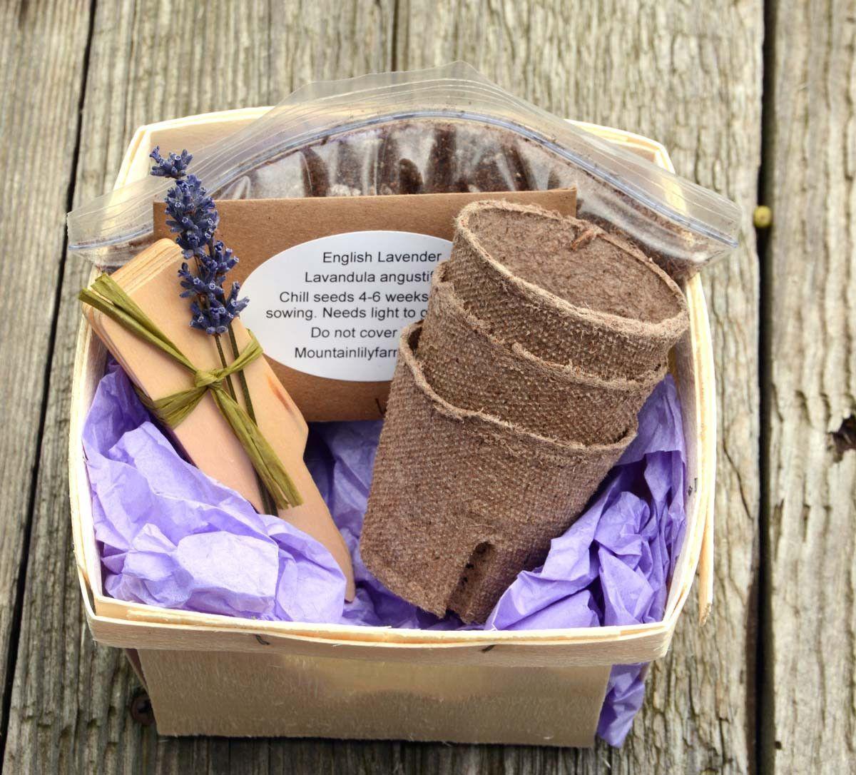 Lavender Garden Seed Kit Grow Organic English Lavender Seeds Plus ...