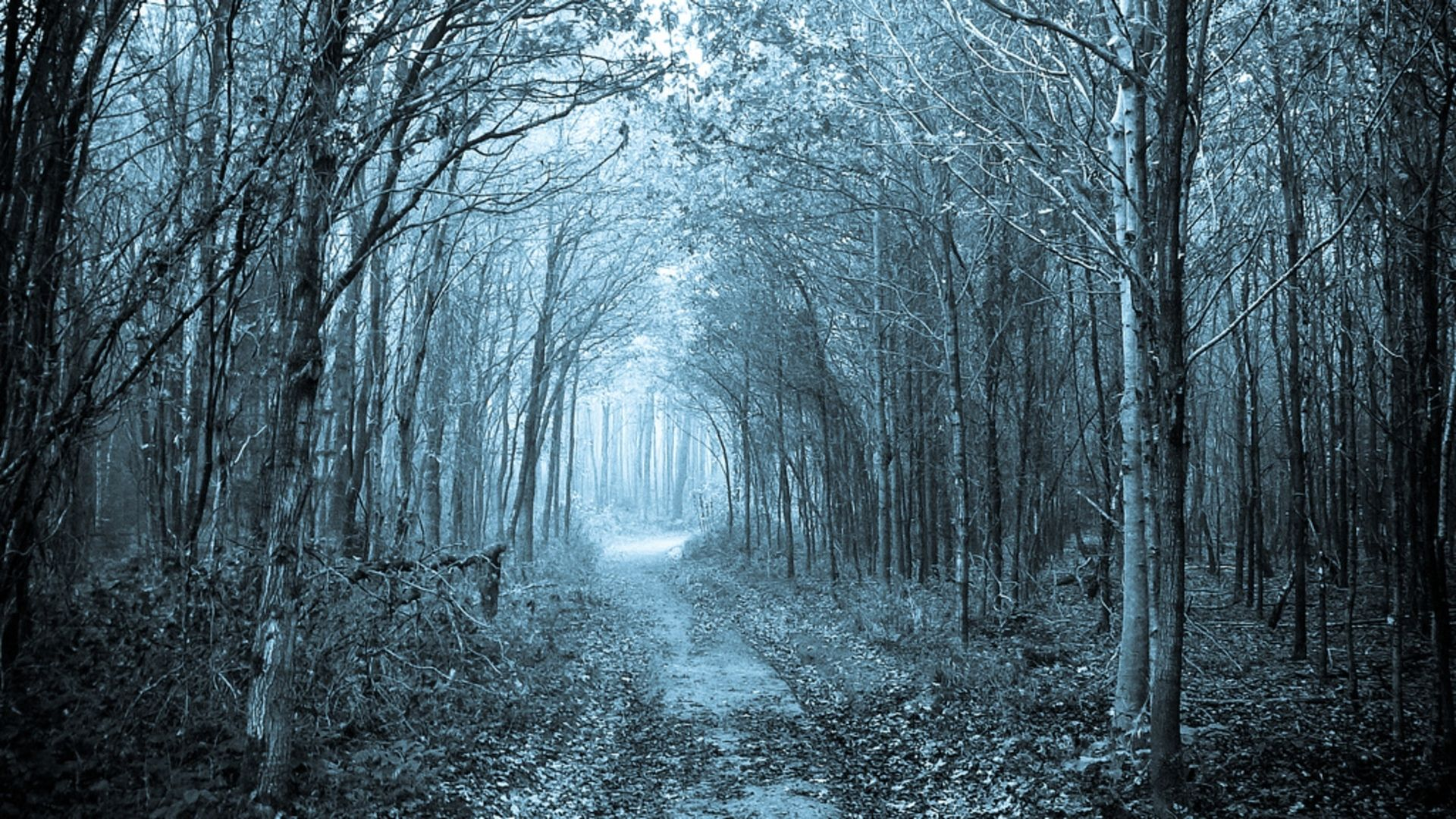 Path Through The Forest Wallpaper Background #em1t6y ...
