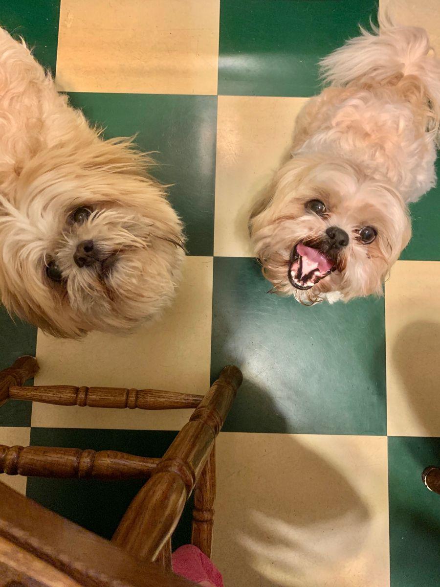 16+ Bay city animal shelter images