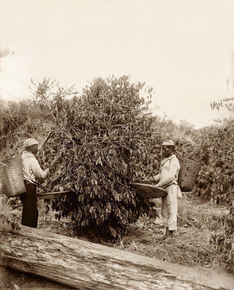 10 raras fotografias de escravos brasileiros feitas 150