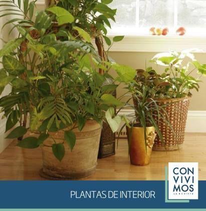 Convivimos trae un nuevo suplemento sobre Plantas de Interior, con notas y tips sobre cómo elegirlas y cuidarlas. Vos, ¿Tenés plantas en casa?