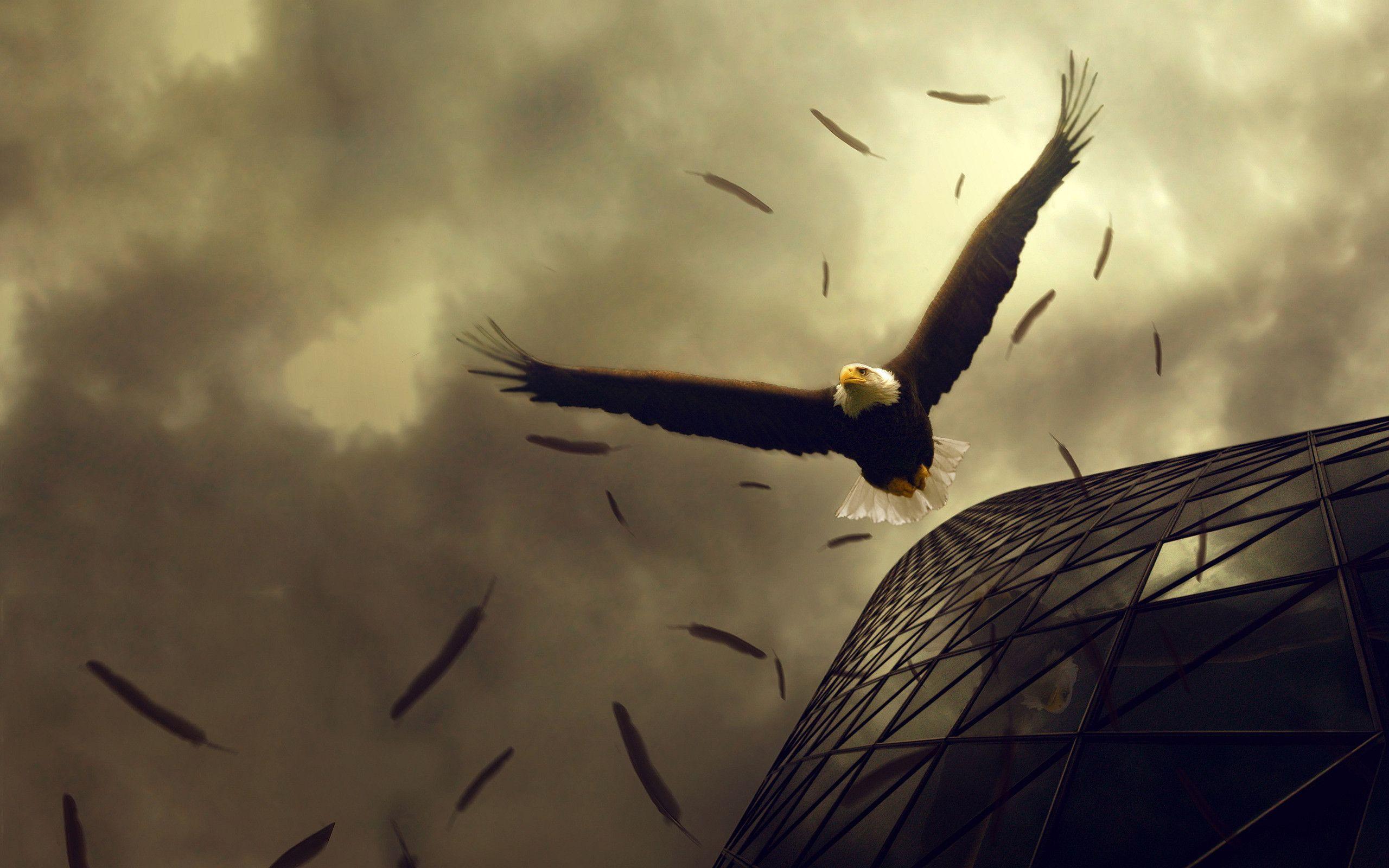 Free Bald Eagle Wallpapers Wallpaper Cave Орел, Орлы