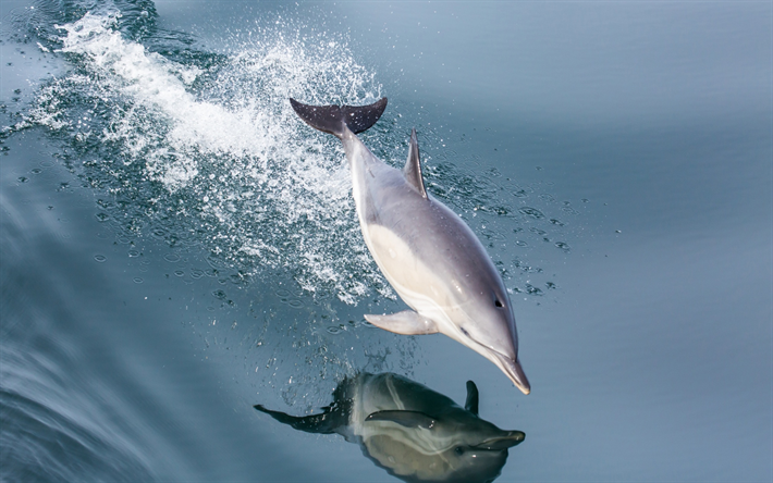 Download Wallpapers Dolphin Sea Mammal Jump Over The Water Waves Besthqwallpapers Com Dauphin Animaux Mammiferes