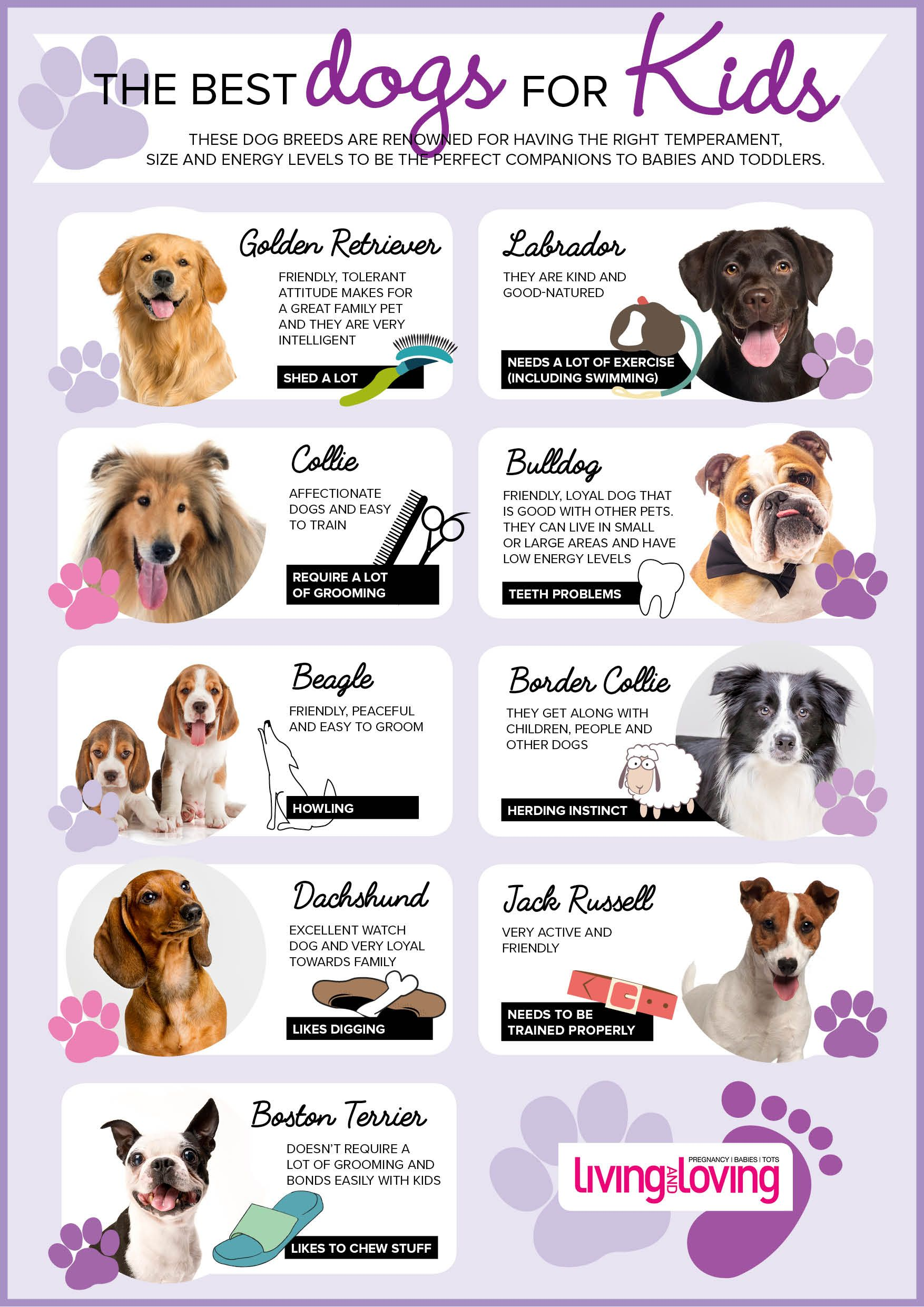 Thinking Of Getting A Pet Here Are The Best Dogs For Kids Best Dogs For Kids Dogs And Kids Dogs