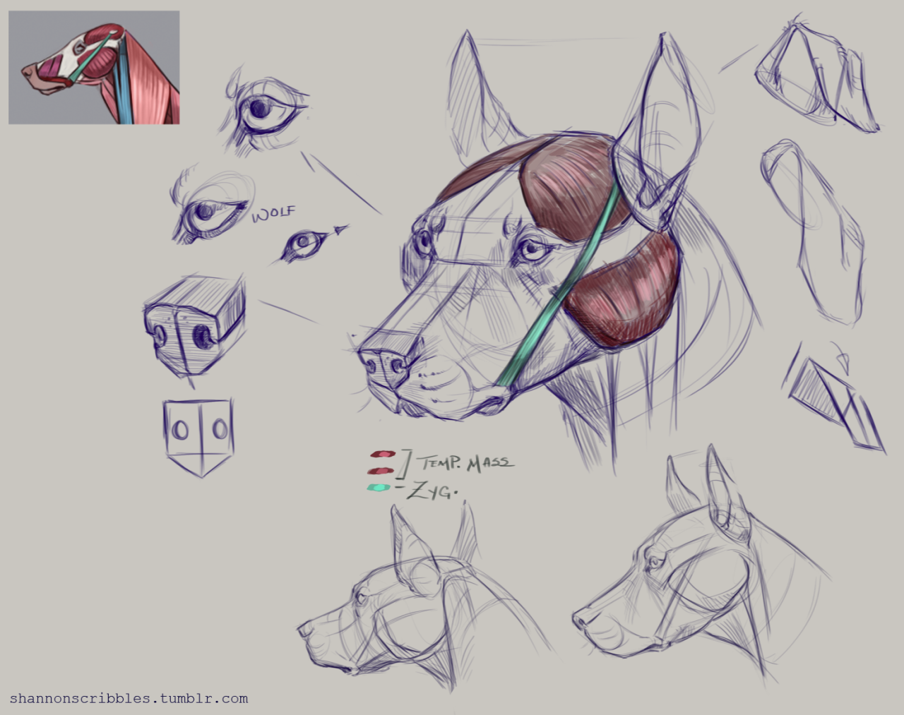Week 5 dog head notes. Woof… | Art♡ | Pinterest | Note, Dog and Anatomy