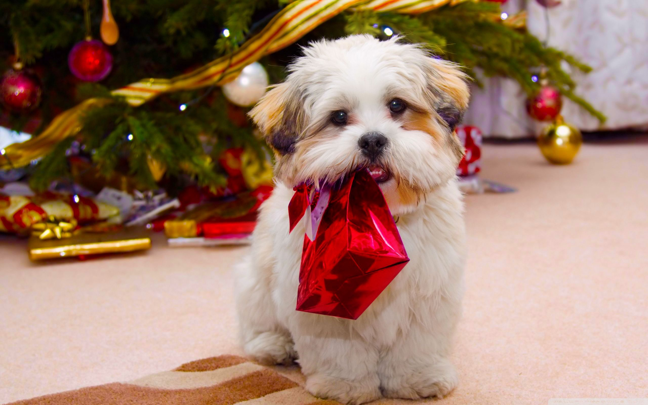 Hd Christmas Wallpaper High Definition Christmas Wallpapers Christmas Animals Christmas Dog Christmas Puppy