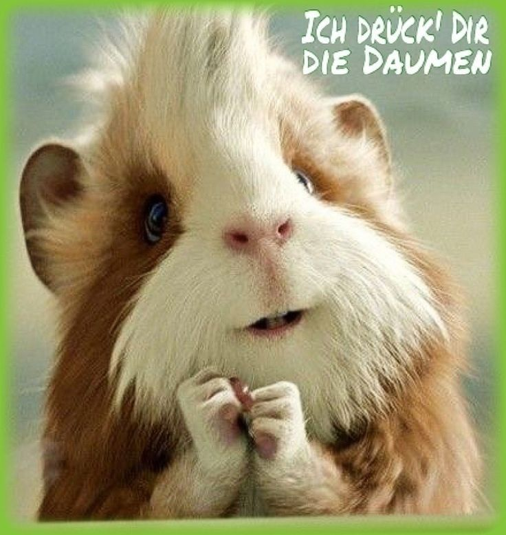 Pin Von Carole Reding Auf Spruche Zitate Ausgestopftes Tier Lustig Spruche Tiere