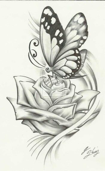 Butterfly pencil drawing would make a beautiful tattoo