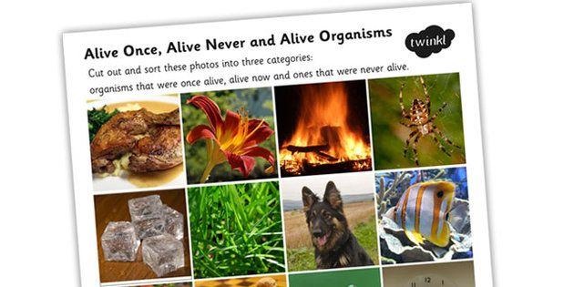Alive Once Alive Never Alive Organisms Photo Sorting Activity Sorting Activities Sorting Photo