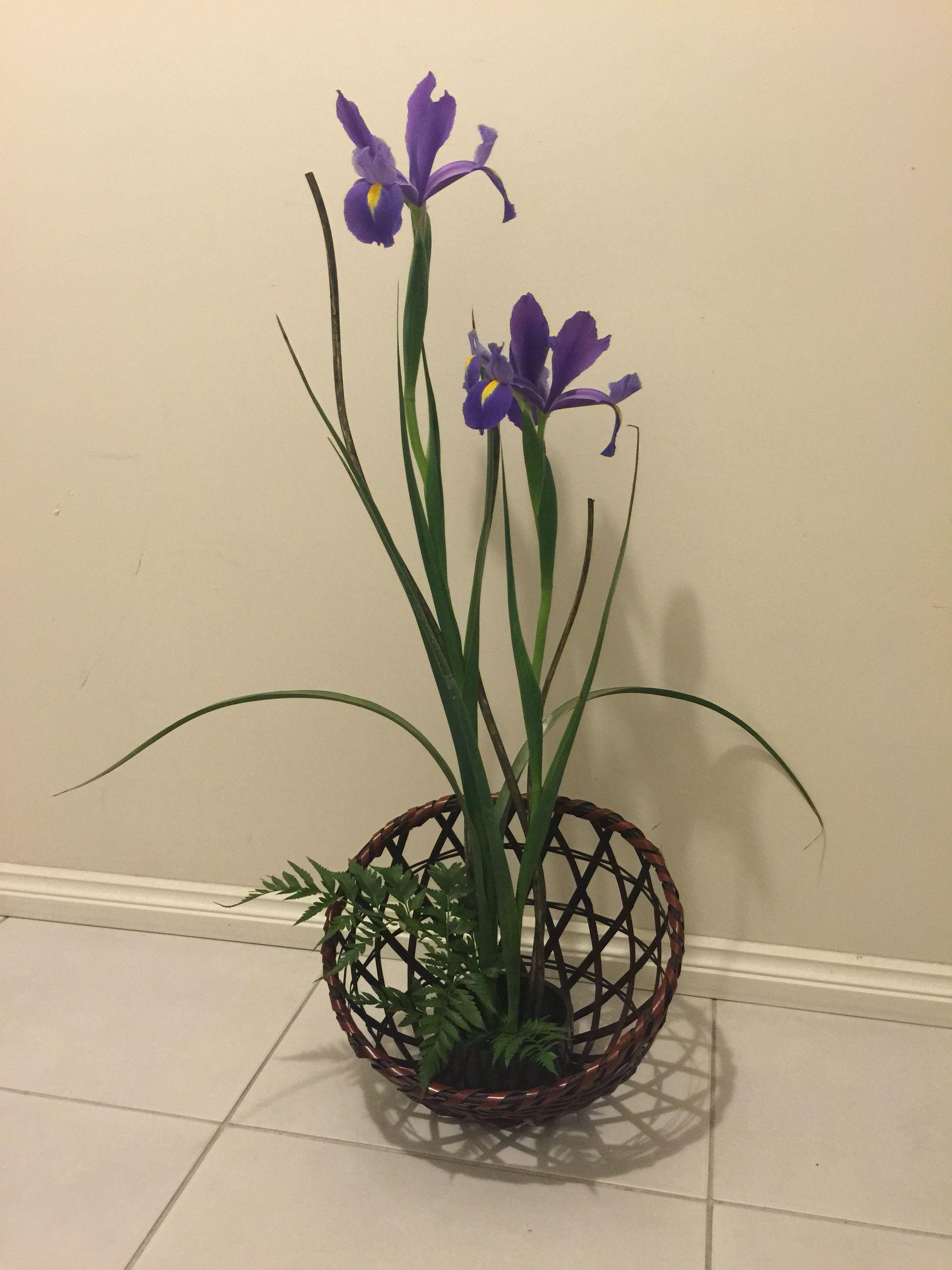 Ikebana iris sandys flowers pinterest ikebana and iris ikebana iris izmirmasajfo
