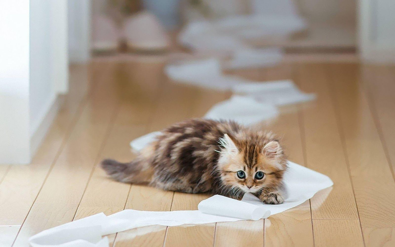 Kitten Playing With Toilet Paper Hd Animals Wallpapers Kittens Funny Cute Baby Animals Baby Animals Pictures