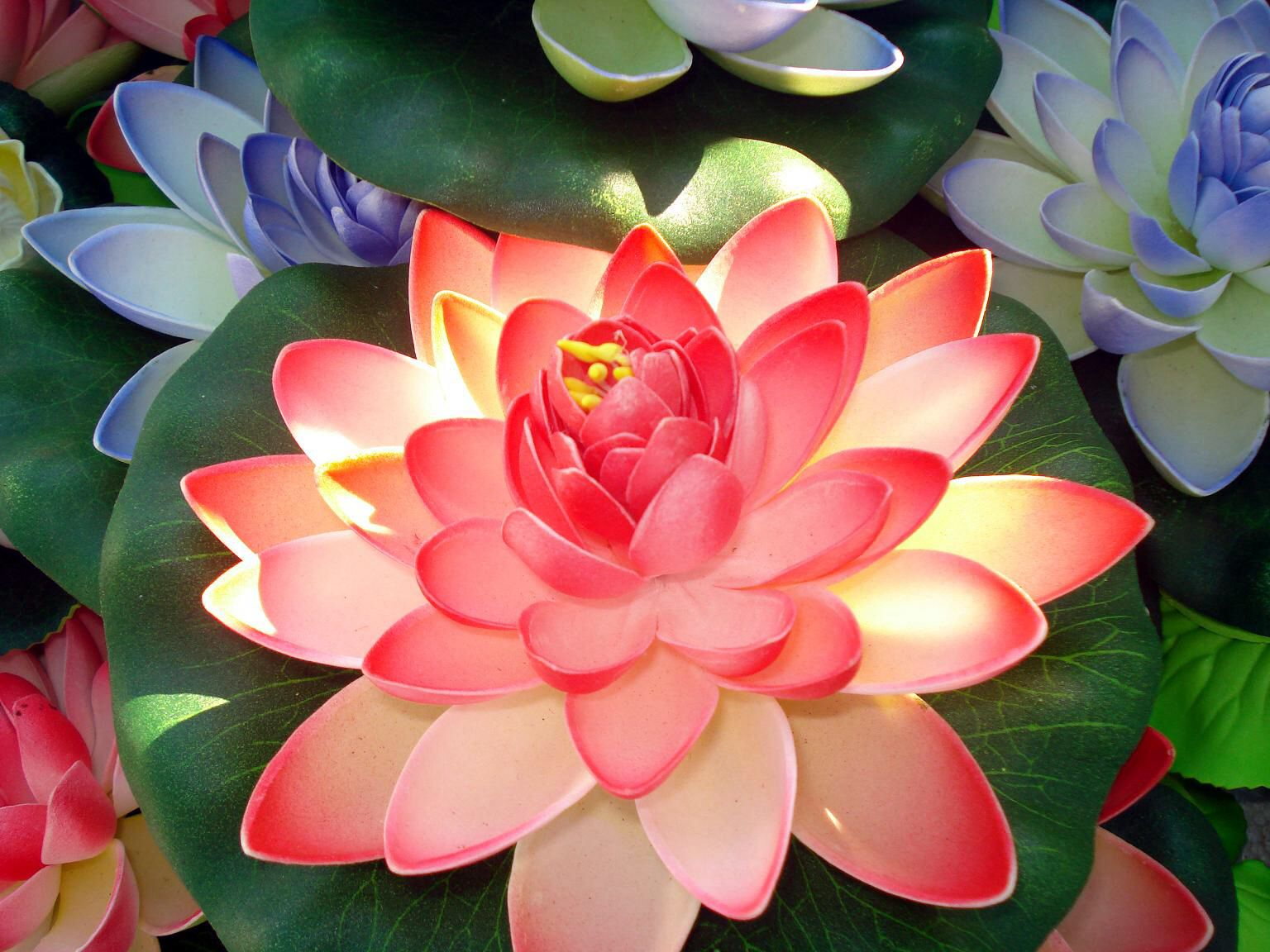 Beautiful Flowers Pinterest Water Lilies And Flowers