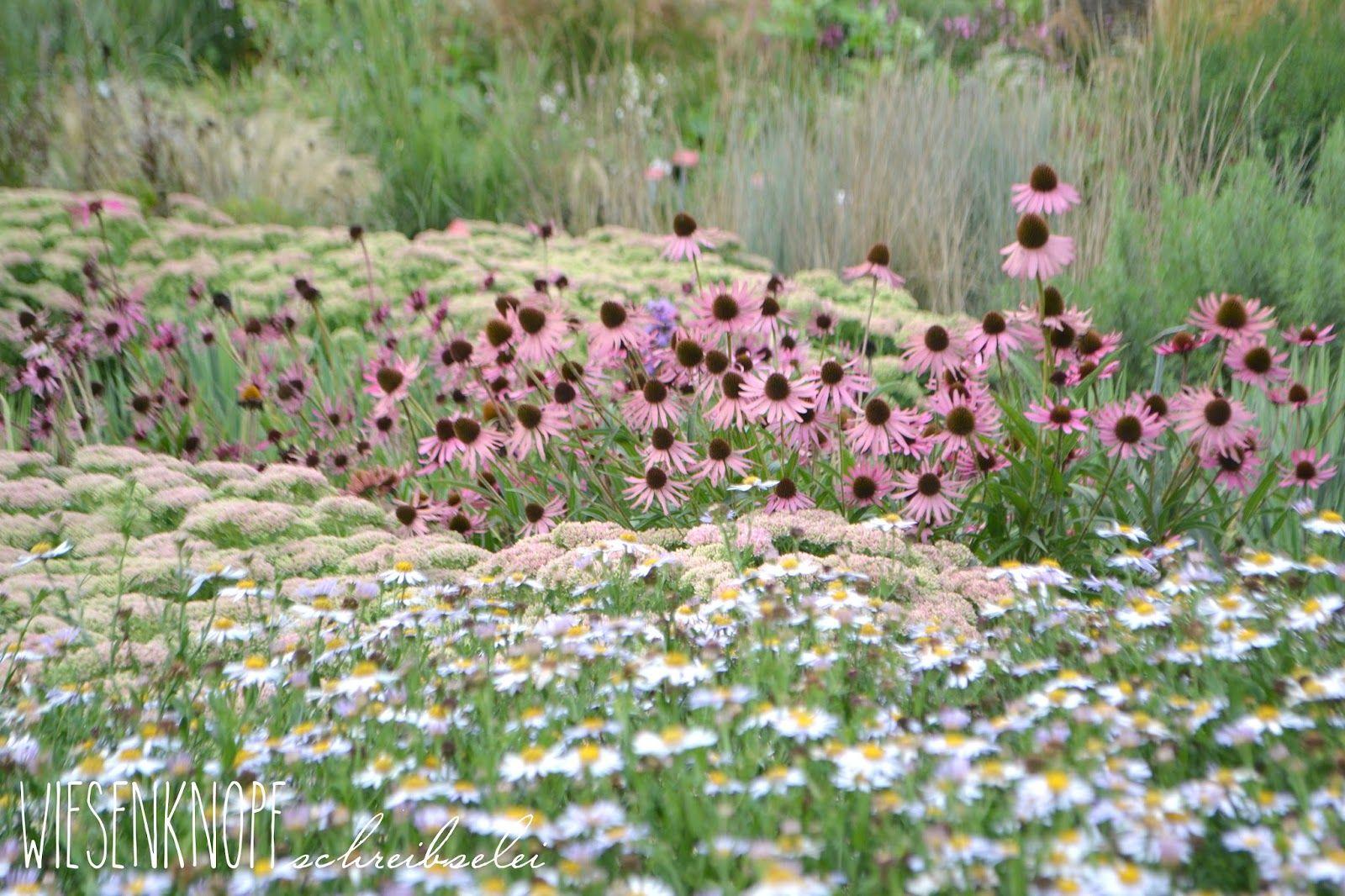 Staudengärtnerei Illertissen wiesenknopfschreibselei impressionen aus illertissen plant