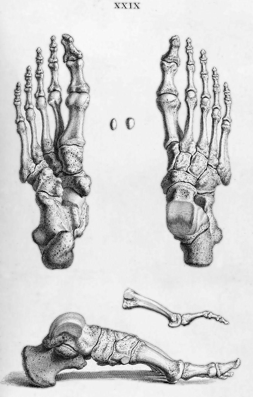 William Cheselden - Pesquisa Google | Anatomy | Pinterest | Menschen ...