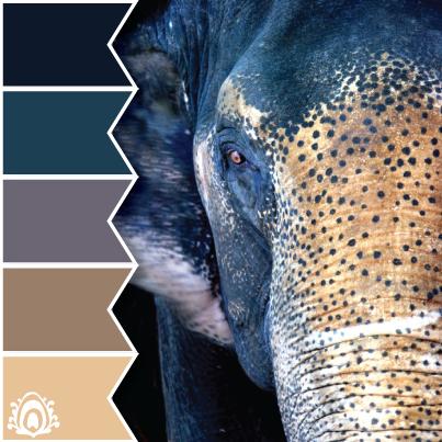 ASIAN ELEPHANT color palette, blue, navy, brown, pastel ...