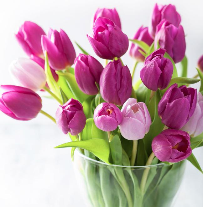 Best Flowers In Winter Tulips In Vase Tulips Garden Tulips Arrangement