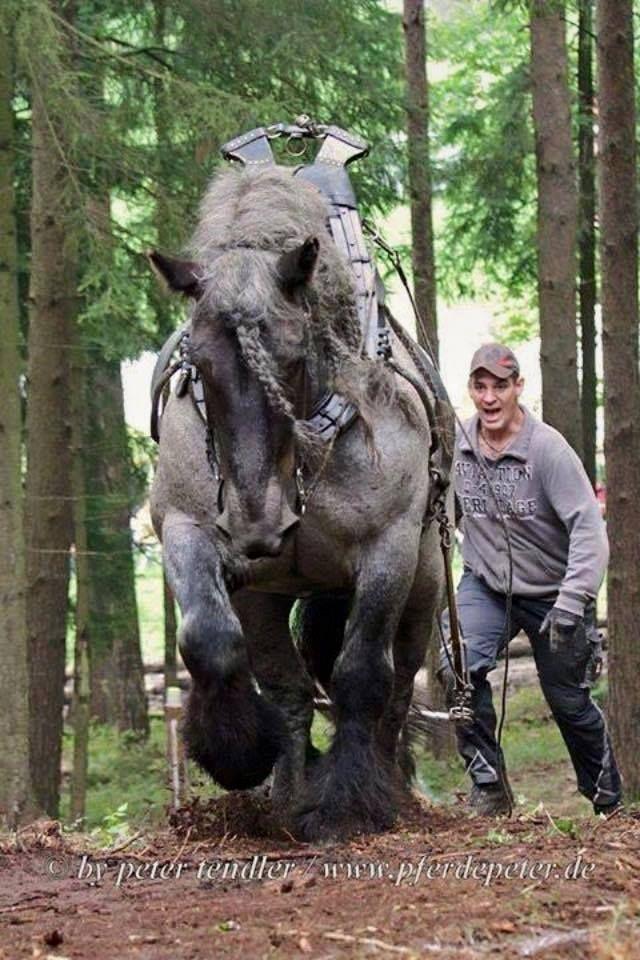 la puissance du cheval et de l 39 homme ensemble quel beau tableau chevaux pinterest cheval. Black Bedroom Furniture Sets. Home Design Ideas