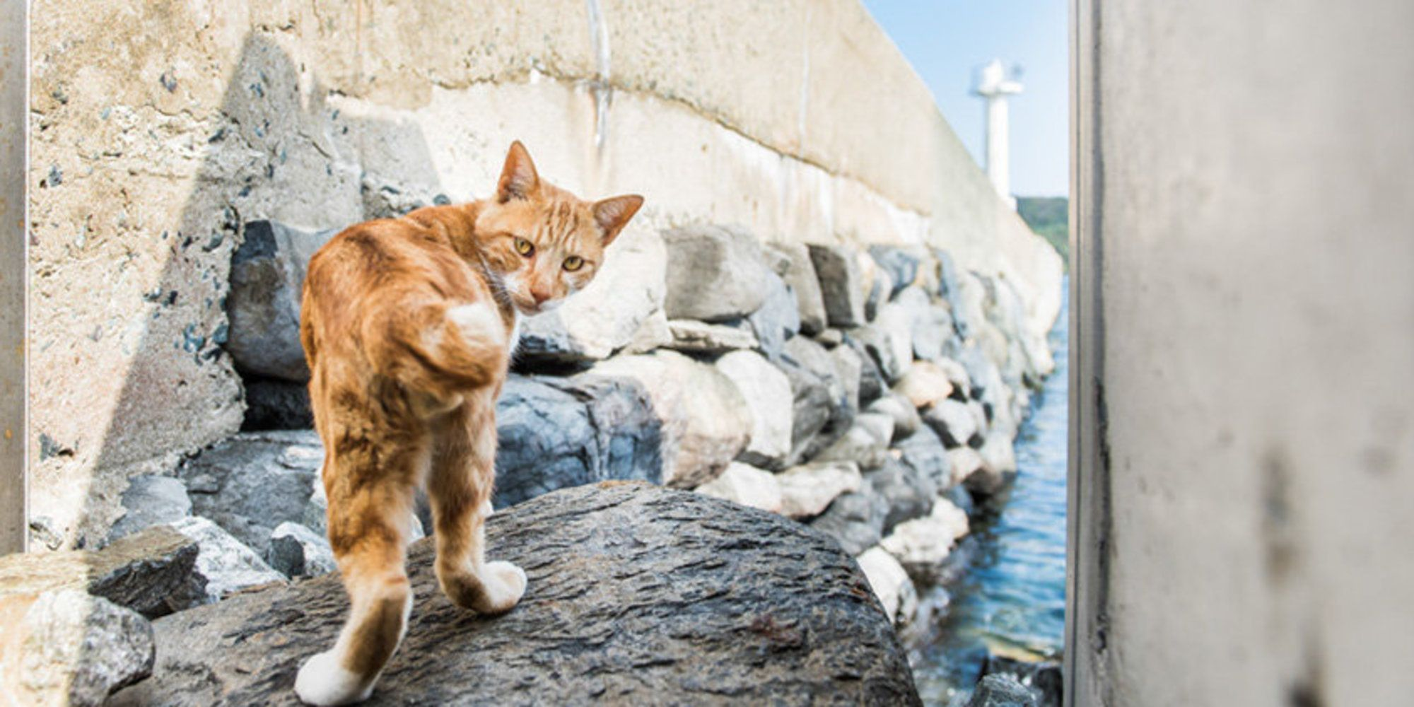 Powerful Photos Reveal The Complex Truth About An Island Ruled By Cats Cats Cat Island Japan Cat Heaven