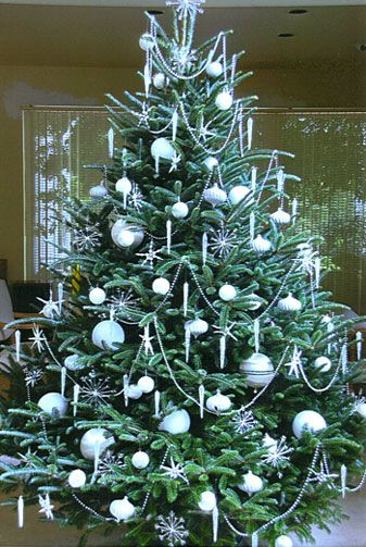 c973ec01fa0 Dan and Bryan s Christmas Trees
