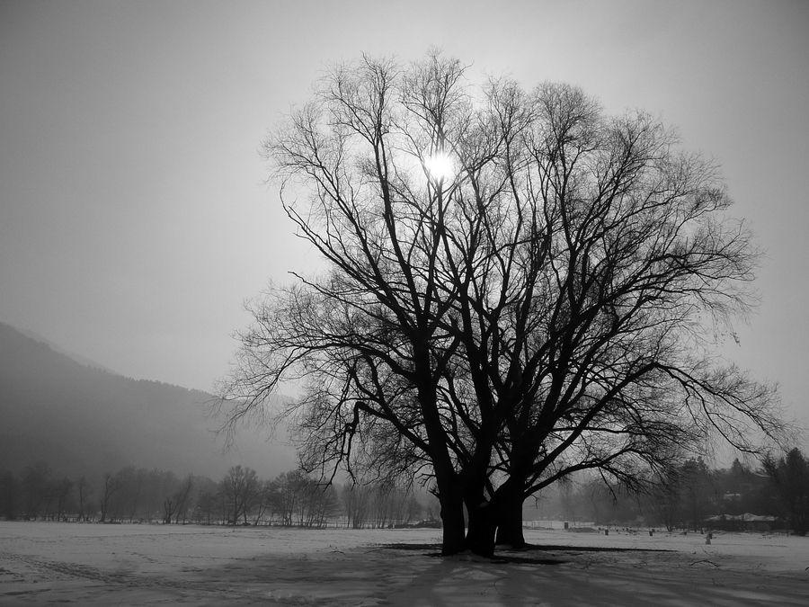 """""""Winter Mood"""" by Martin Zeinelov"""