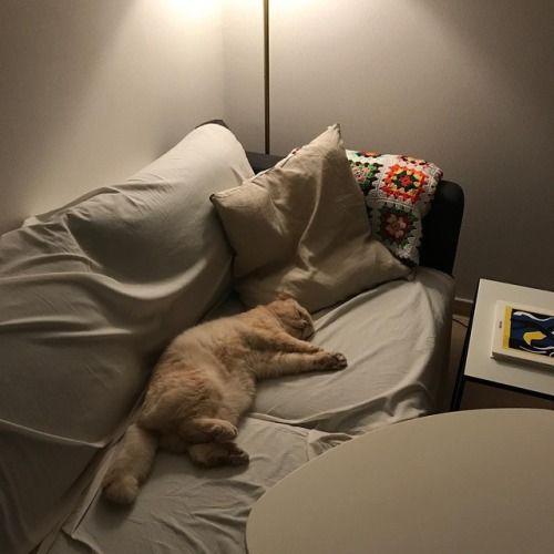 Photography おしゃれまとめの人気アイデア Pinterest Poorichaya Kongudom 猫 液体 おしゃれな 絵 子猫