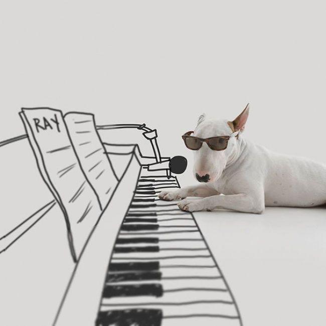 Sempre Cantei Errado: Esposa o abandonou e levou tudo da casa menos o cachorro aí ele teve uma ótima ideia.