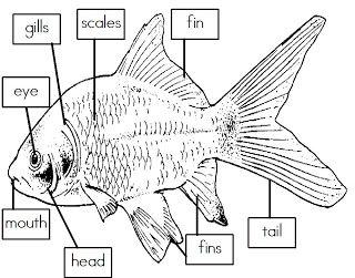 Mrs I S Class Label The Parts Of A Fish Freebie Fish Unit Fish Unit Study Fish Activities