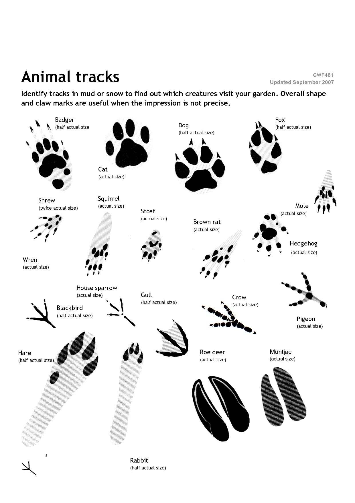 Wild Animal Footprints