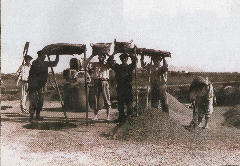 LA ALBUFERA Y EL ARROZ   Las tareas de cultivo de arroz, una vez recolectado eran lentas y laboriosas: pasado por el trillado, limpieza, descascarillado, blanqueo y clasificación.