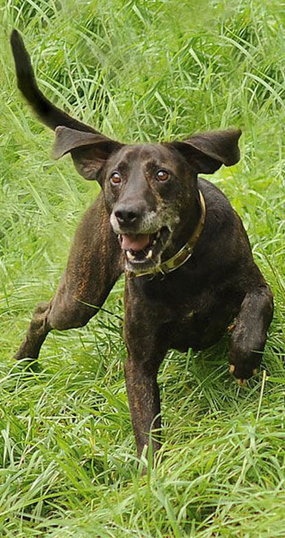 Plott hound is star of special museum exhibit
